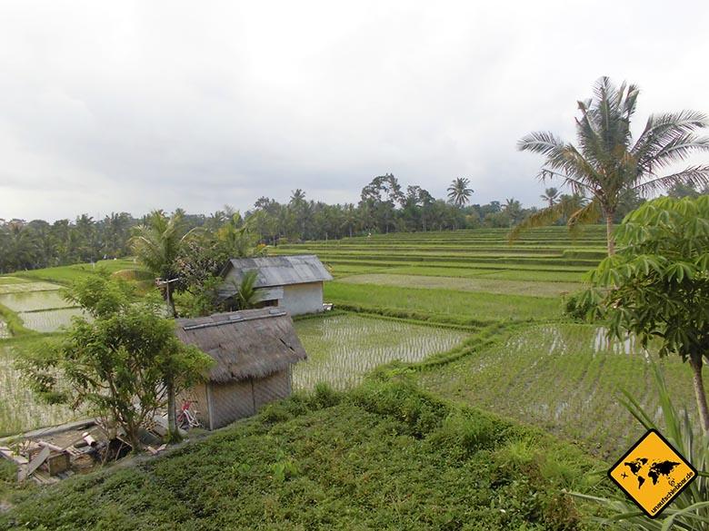 Bali Sehenswürdigkeiten top 10 Ubud Reisfelder Hütten