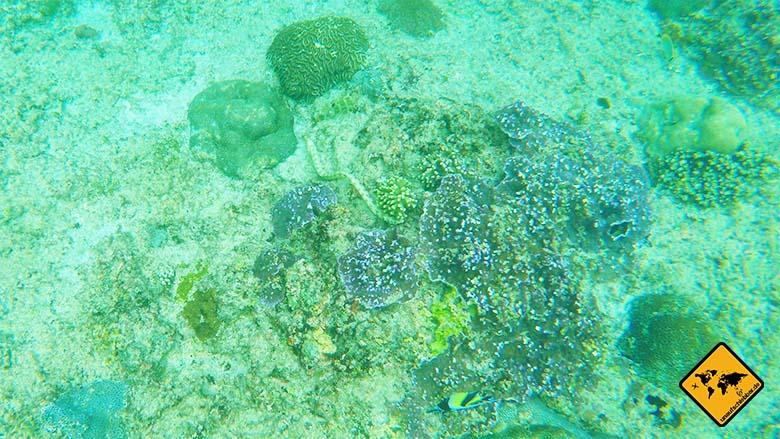 Bali Strände Blue Lagoon Muräne
