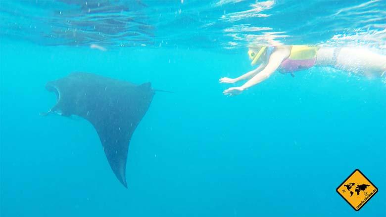 Bali Strände Unterwasserwelt Manta Point