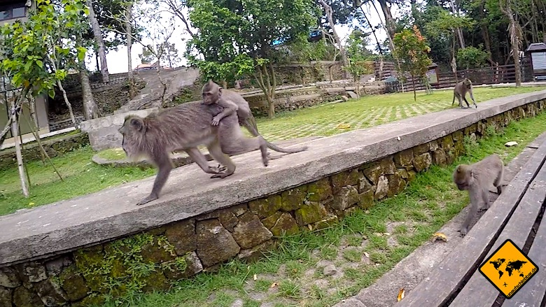 Bali Tagesausflüge Monkey Forest Ubud
