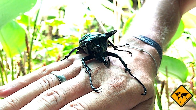 Bali Tagestouren Bali Butterfly Park Hirschkäfer