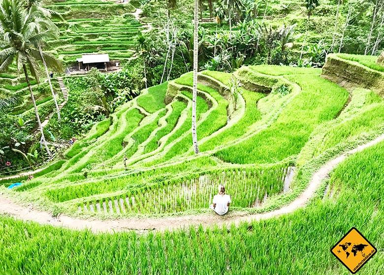 Bali Tipps Reisterrassen Tegalalang