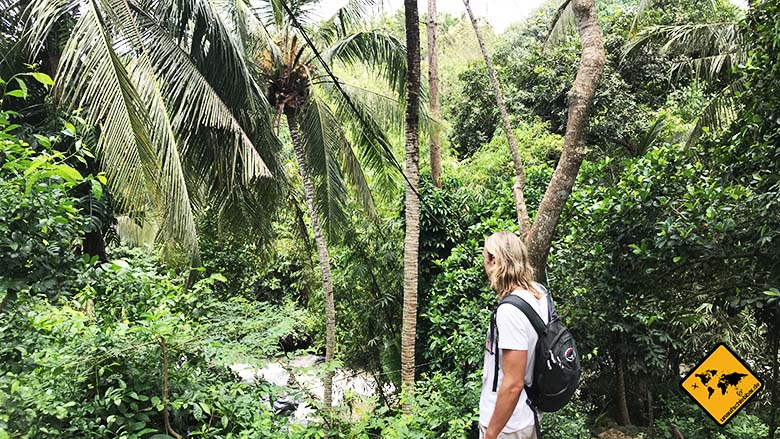 Bali Wasserfall Blangsinga Waterfall Dschungel Weg