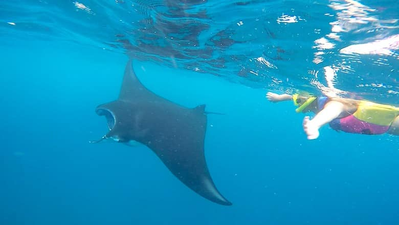 Bali interessante Orte Manta Point