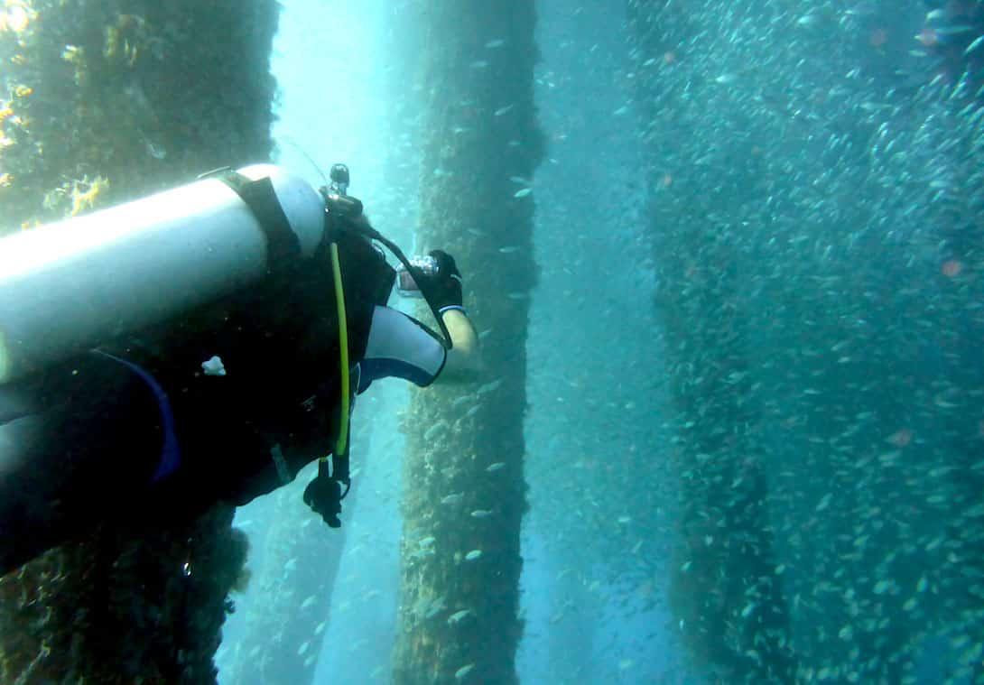 Bali tauchen Jetty Stegpfeiler Fische