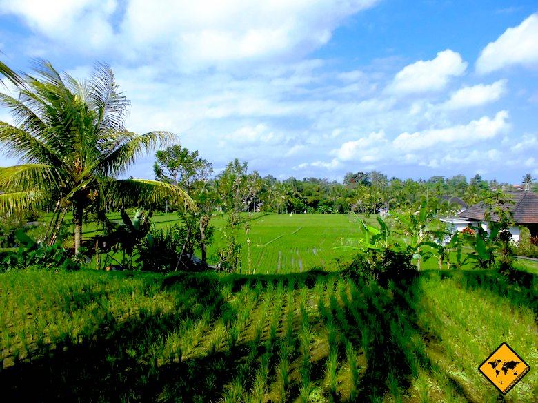 Bali und Thailand Reisfelder