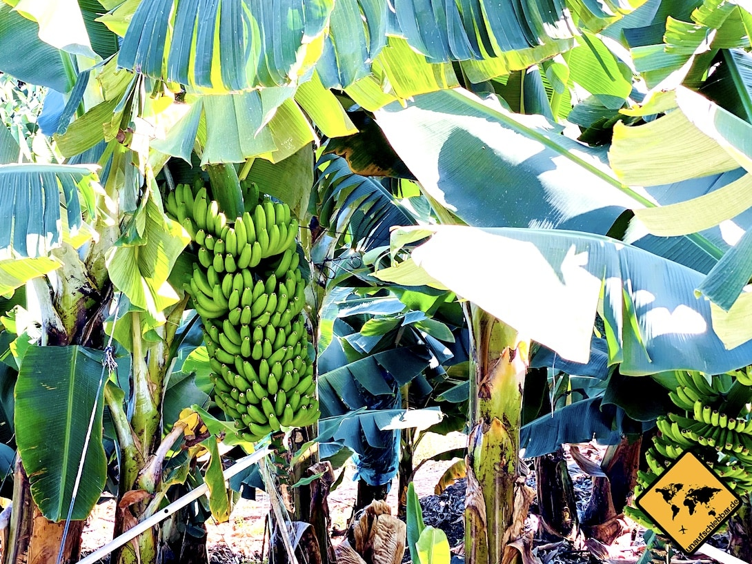 Bananenmuseum La Palma