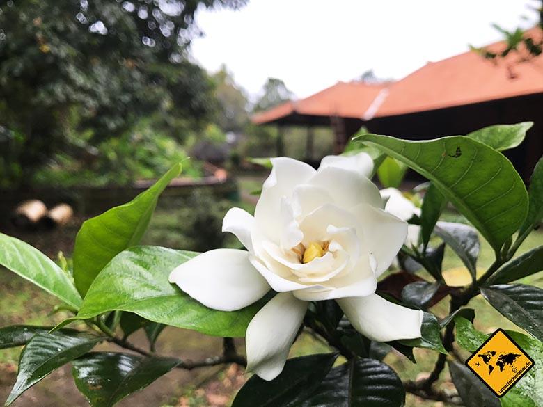 Batukaru Temple Bali Blumen