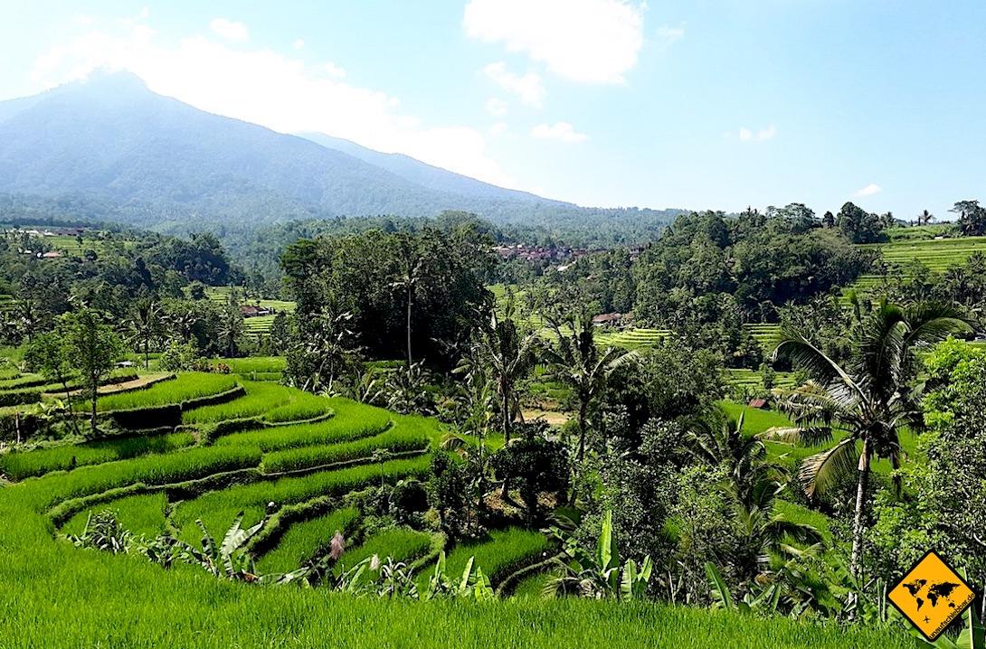 Belimbing Reisterrassen auf Bali