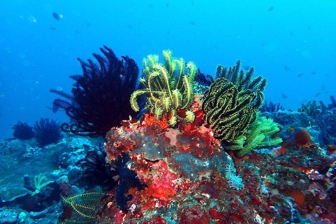 Bio Wreck Umweltprojekt Korallen Bali