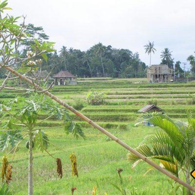 Blick auf die Reisterrassen im Karsa Kafe Ubud
