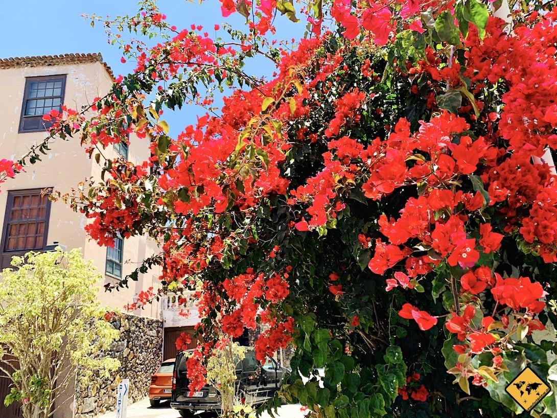 Blütenpracht Teneriffa La Orotava