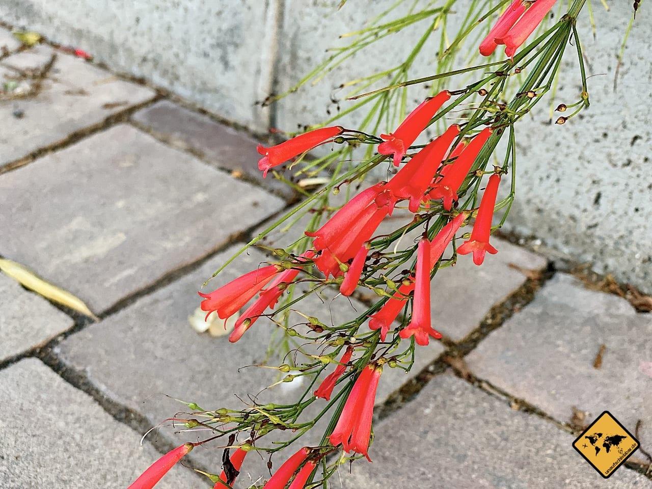 Blume Parque de Las Eras