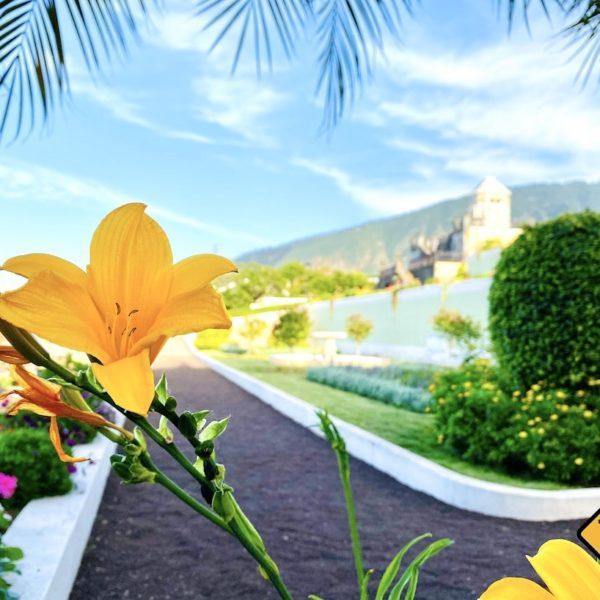 Blume Victoria Garden