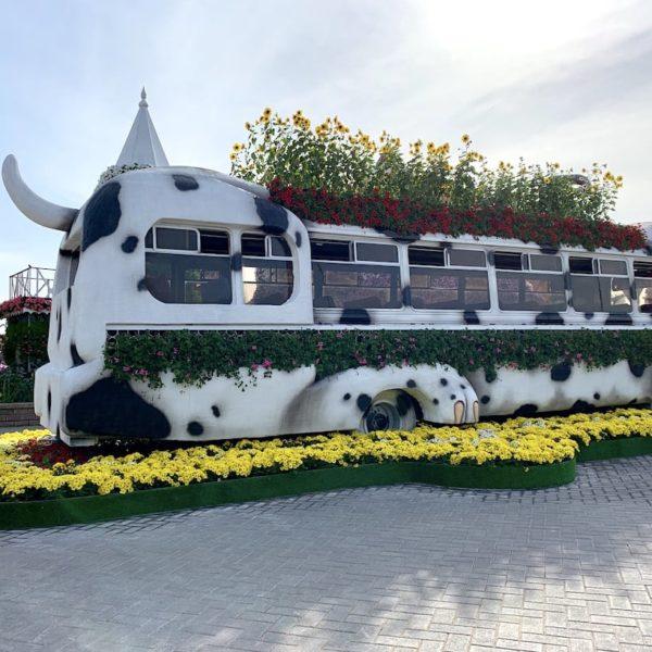 Blumen Bus Dubai Miracle Garden
