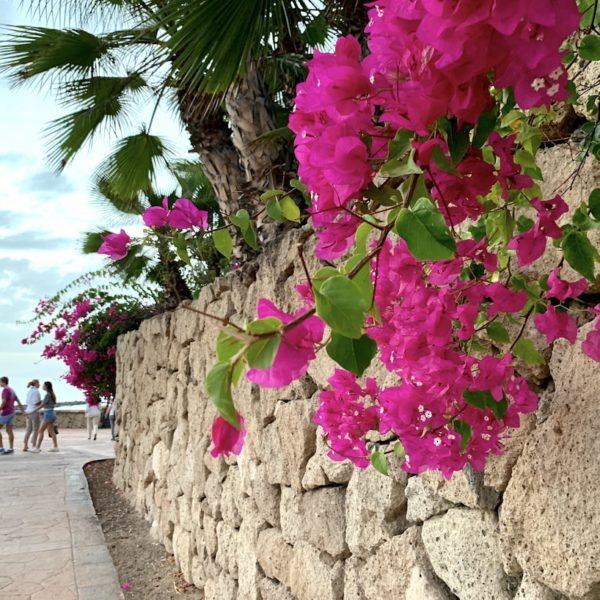 Blumen Promenade Playa del Duque Teneriffa