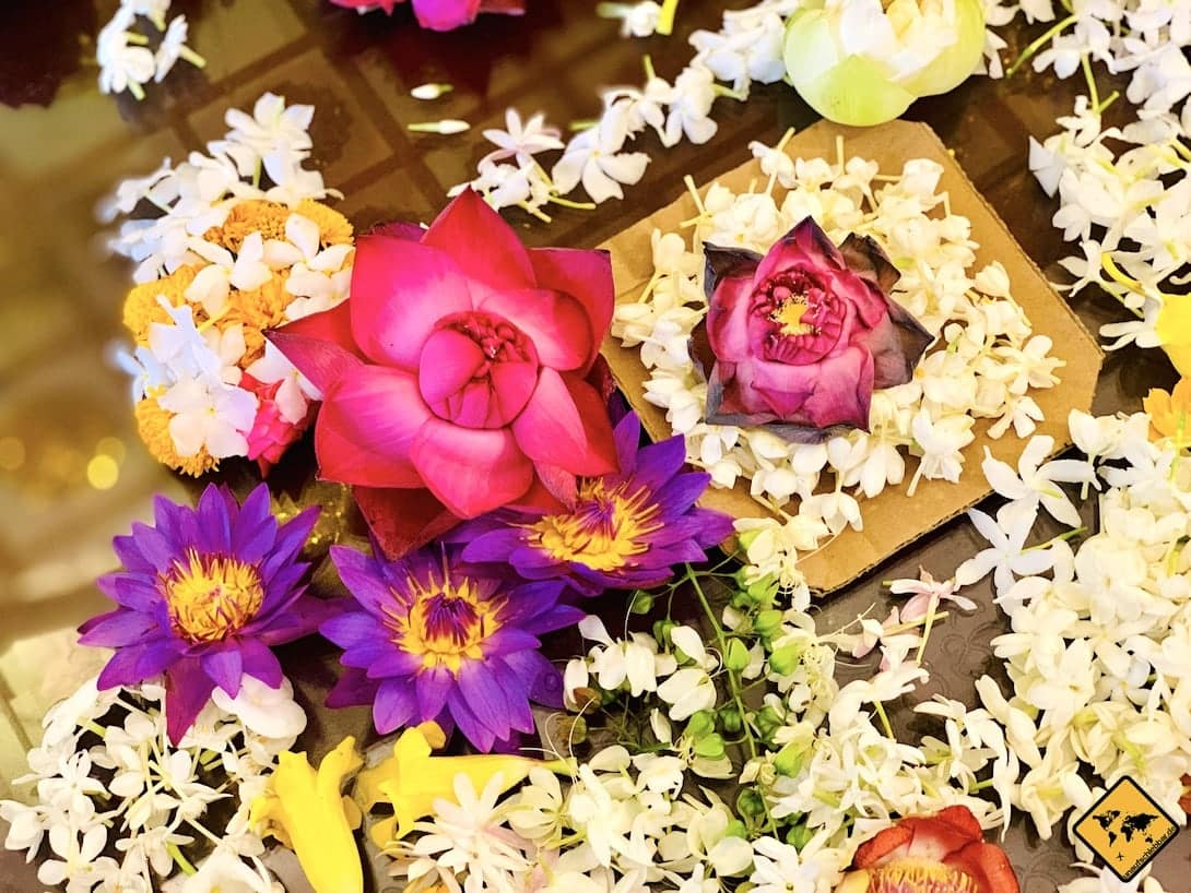 Blumen Zahntempel Kandy