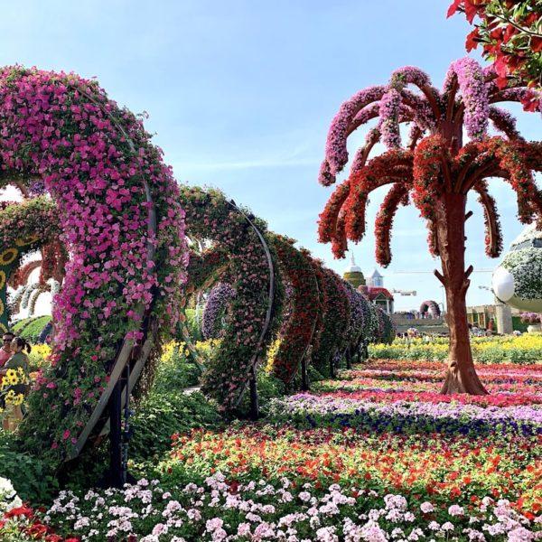 Blumen bunt Miracle Garden Dubai