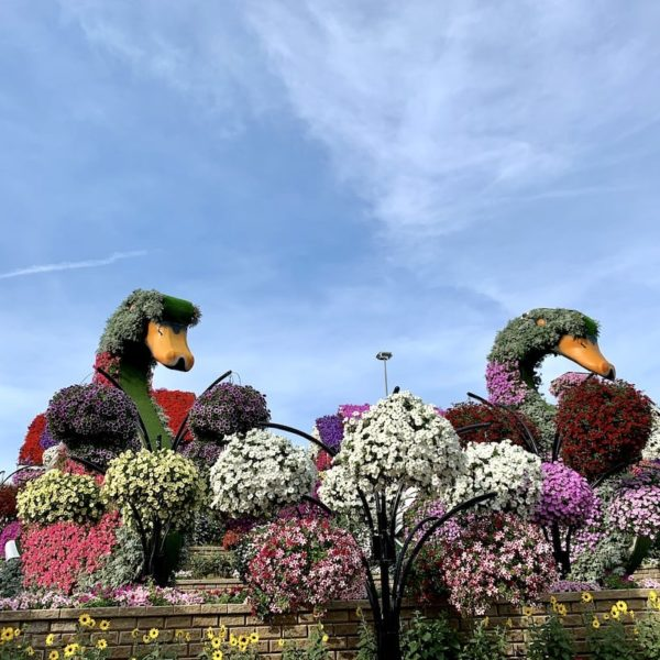 Blumengarten Dubai Schwäne