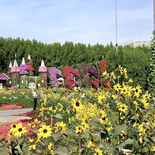 Blumenpracht Miracle Garden Dubai