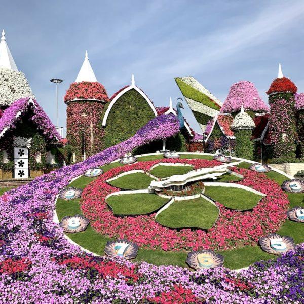 Die bekannte Blumenuhr ist ein besonderes Highlight im Miracle Garden in Dubai