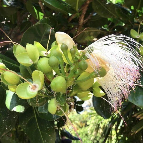 Botanischer Garten Santa Cruz Blume exotisch