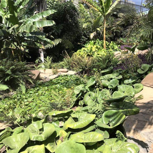 Botanischer Garten Santa Cruz Teneriffa