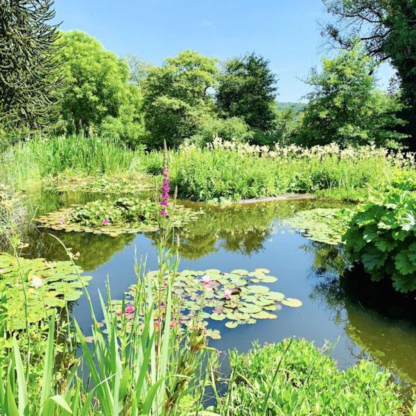 Botanischer Garten Wuppertal Seerosenteich