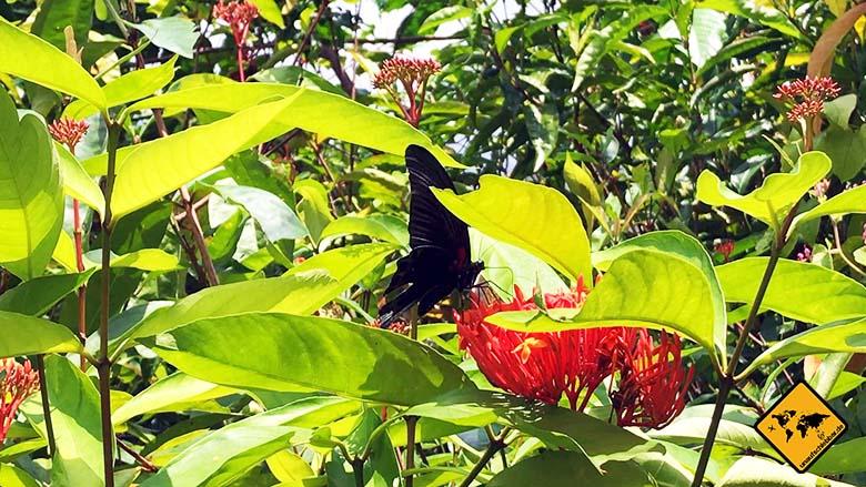 Butterfly Park Bali in Tabanan