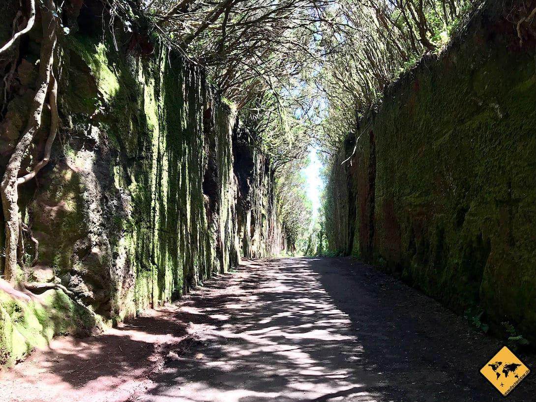 """Die bemoosten Mauern bei """"Camino viejo al Pico del Inglés"""" lassen das Anaga Gebirge besonders mystisch erscheinen"""