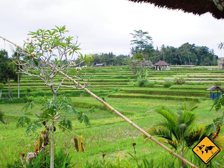 Campuhan Ridge Walk Bali Karsa Kafe