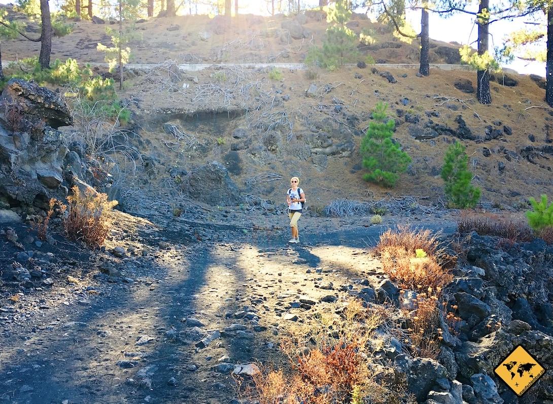 Chinyero Arenas Negras Wanderweg Pinienwald