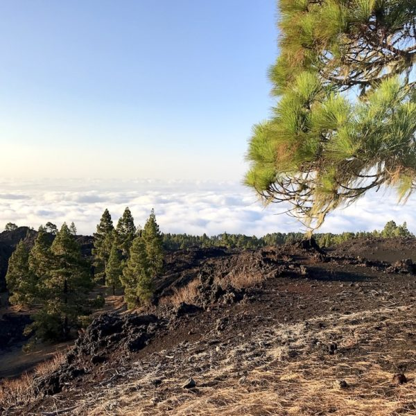 Chinyero Wanderung Nationalpark Teide