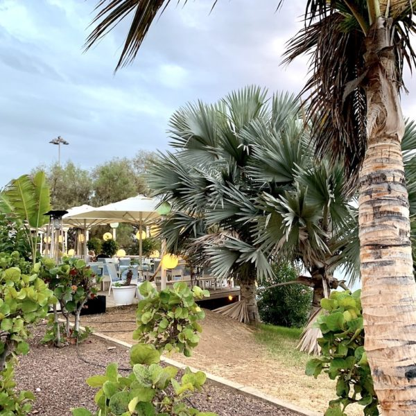 Costa Adeje Teneriffa Restaurant grün