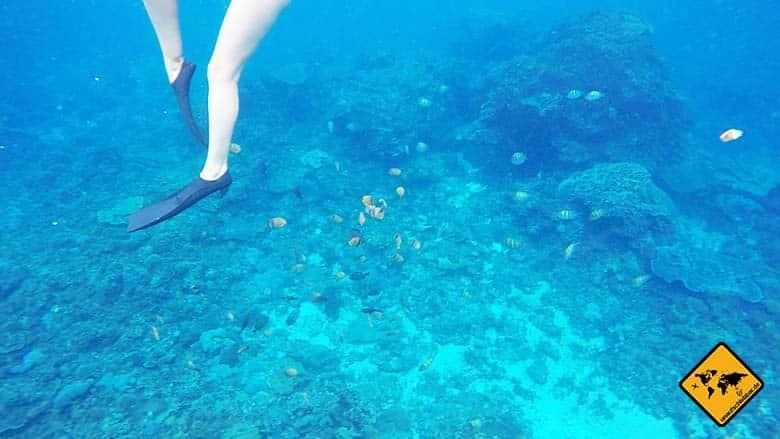 Crystal Bay Bali schnorcheln