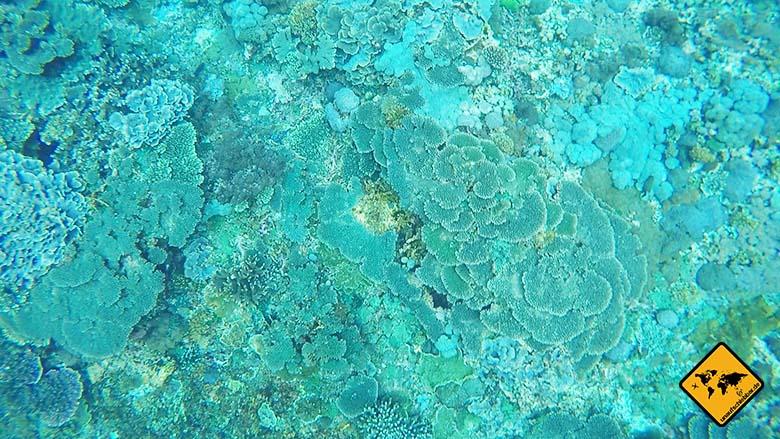 Crystal Bay Nusa Penida Korallen