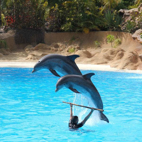 Delfinshow Loro Parque Puerto de la Cruz