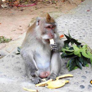 Der Affenwald in Ubud ist touristisch zwar bekannt jedoch einen Stopp auf deiner Bali Rundreise wert