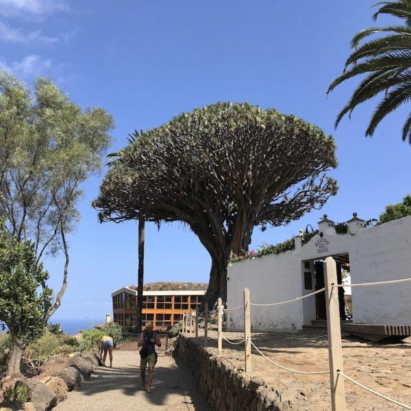 Drago Park Drachenbaum Teneriffa