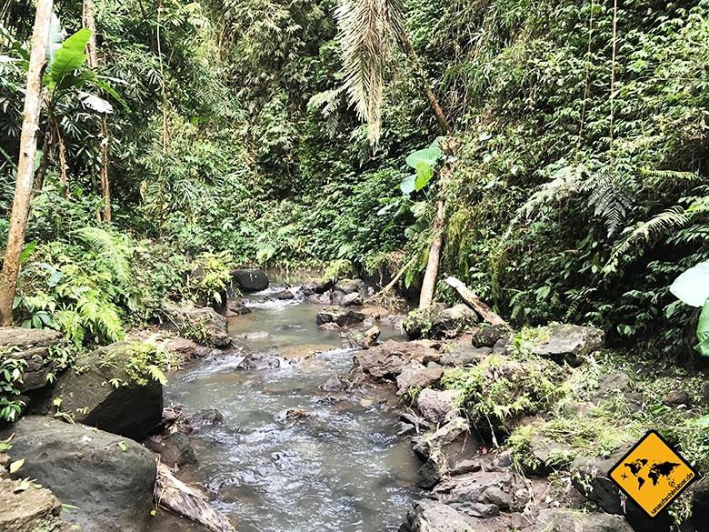 Dschungel-Landschaft Bangli