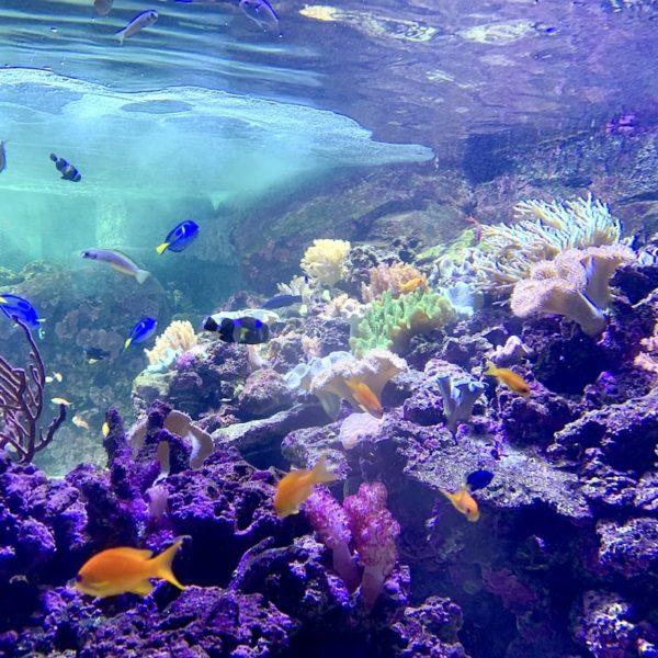 Dubai Aquarium Dori