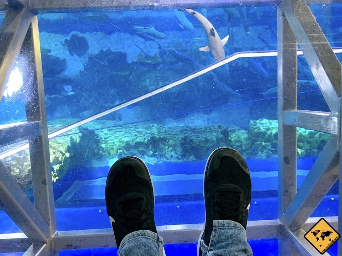 Dubai Aquarium Glasboden