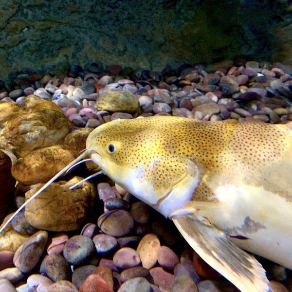 Dubai Aquarium Meeresbewohner