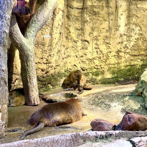 Dubai Aquarium Otter