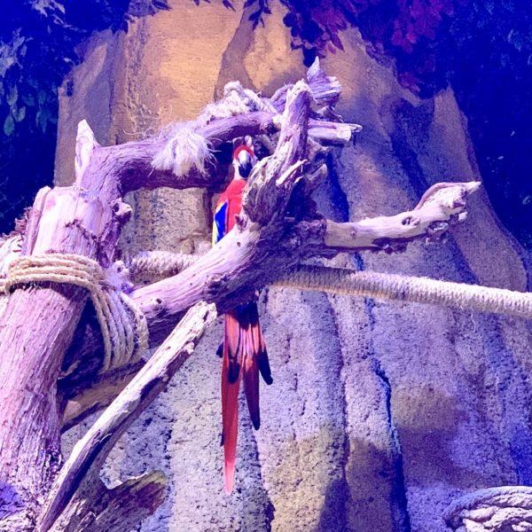 Dubai Aquarium Papagei