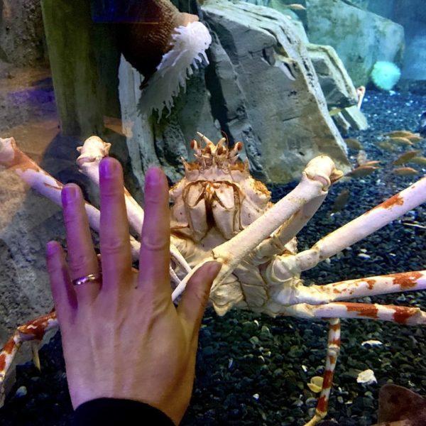 Dubai Aquarium Riesen-Krabbe
