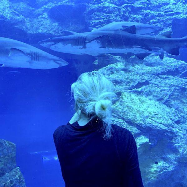 Dubai Aquarium Tunnel Haie