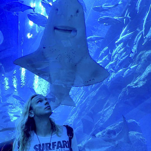 Dubai Aquarium Unterwasser-Tunnel