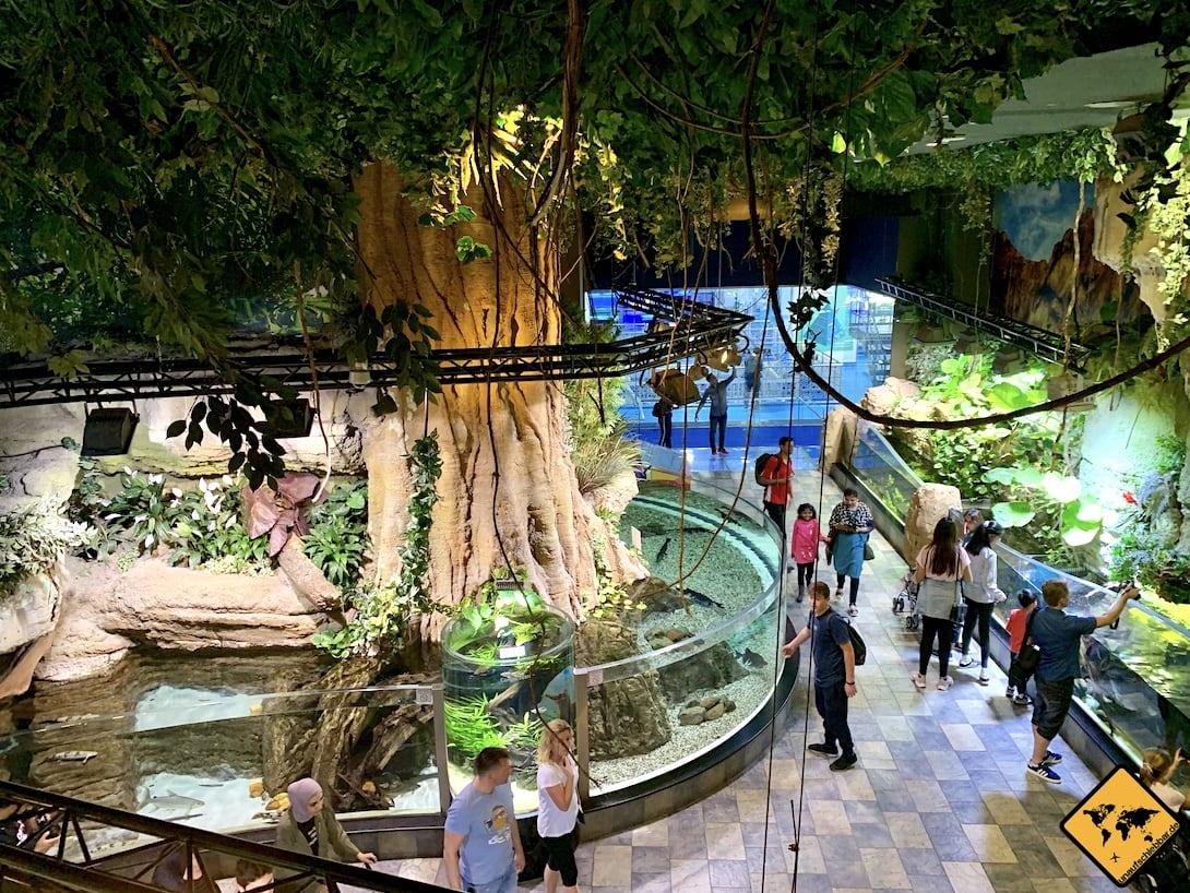 Dubai Aquarium Unterwasser-Zoo