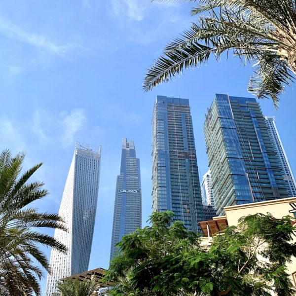 Dubai Marina Palmen